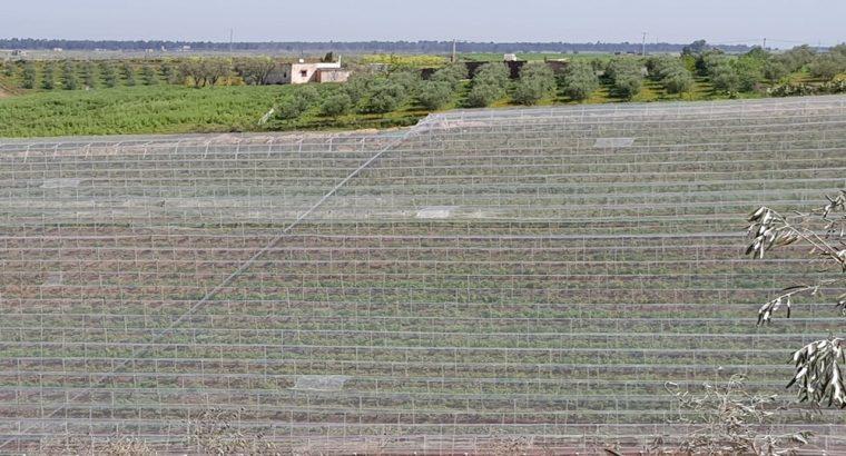 مزرعة بمختلف الفواكه والاشجار المثمرة للبيع